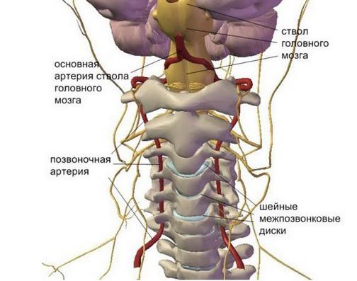 pozvonochnaya-arteriya