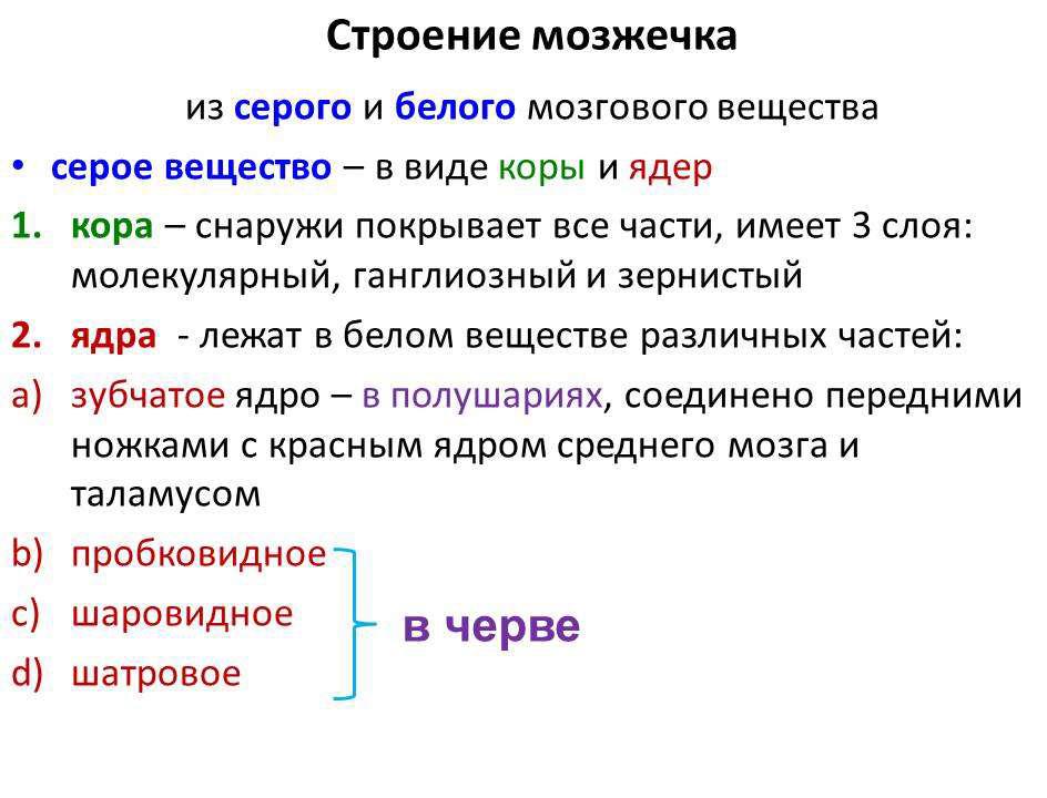 mozhechok