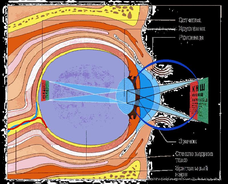 eye-imagies