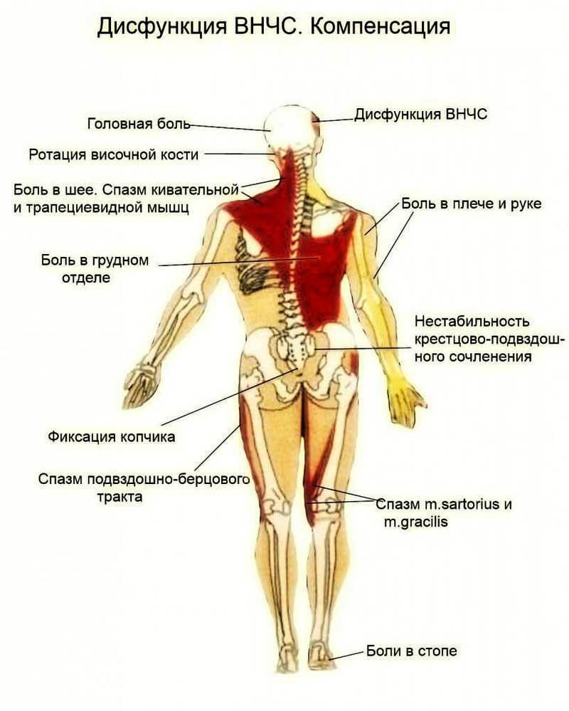 disfunktion visochno nizhnechelustnoy sustav 7